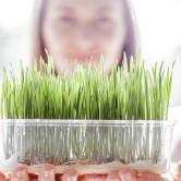 Adicione rebentos e sementes à sua dieta